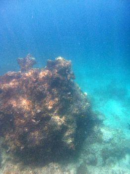 エンタルーラ島シュノーケリング7.JPG