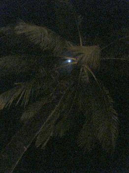 月と椰子の木.JPG