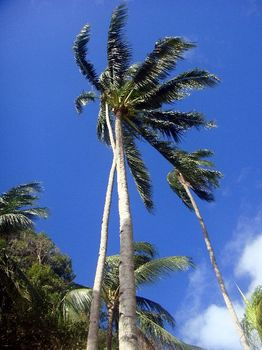 20.風吹く椰子の木.JPG