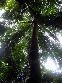 7.見上げた椰子の木.JPG