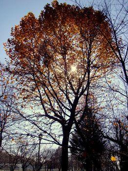 影絵の木.JPG